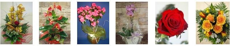 Vendita fiori online florence fiori a domicilio piante for Fiori e piante online